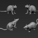 Rat 2 - Standing - Middle