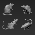 Rat 3 - Standing - High 1