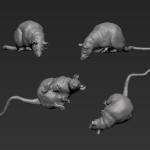 Rat 4 - Looking Down - Straight