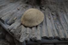 British Mk 1 Helmet with Sandbag Cover
